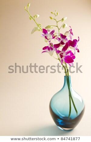 Mooie orchidee glas vaas witte tabel Stockfoto © amok