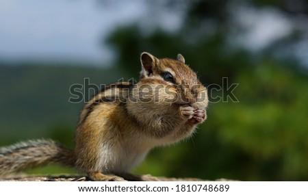 çizgili sincap ağaç kahverengi orman gözler doğa Stok fotoğraf © Elenarts