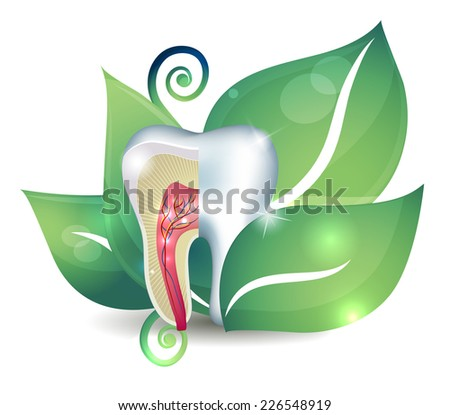tooth cross section and leaf bright abstract treatment concept stock photo © tefi