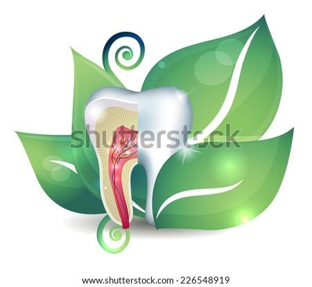 Dente seção transversal folha brilhante abstrato tratamento Foto stock © Tefi