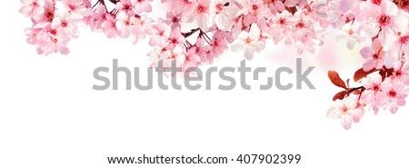 Pembe kiraz çiçeği bo gri çiçek Stok fotoğraf © neirfy