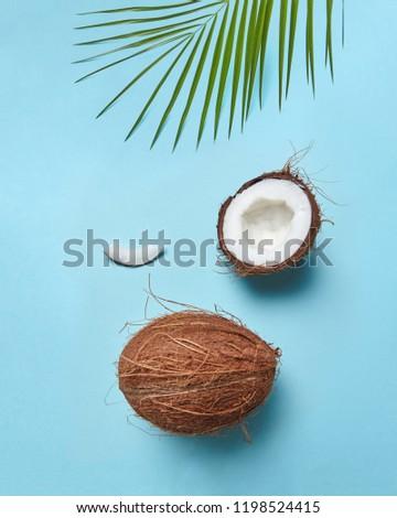 Groene palmblad half kokosnoot tropische moer Stockfoto © artjazz