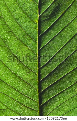 Macro photo of the back side of a green leaf with streaks. Natural background. Flat lay Stock photo © artjazz