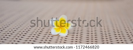 Tropical flower on a deckchair. Holiday concept BANNER, long format Stock photo © galitskaya