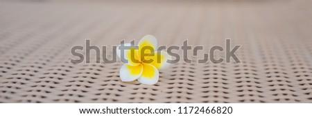 шезлонг · белый · изолированный · полосатый · древесины · солнце - Сток-фото © galitskaya