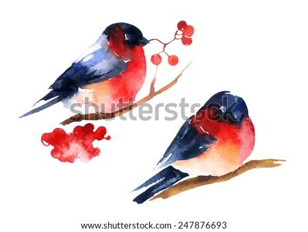 Bonitinho pássaro ramo aquarela vetor inverno Foto stock © frimufilms