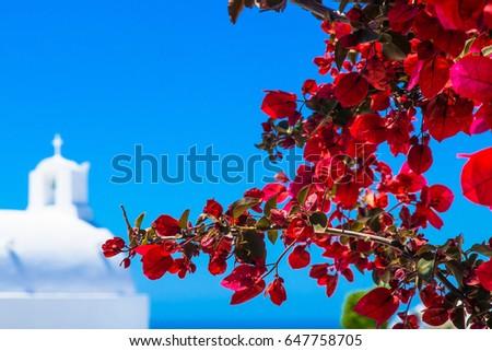 Red bougainvillea flowers on Mediterranean turquoise sea, romantic aerial view Stock photo © Burchenko