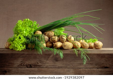 Young uncooked fresh potato and dill Stock photo © furmanphoto