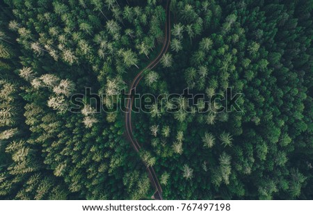 Aerial view of forest lake Stock photo © olira