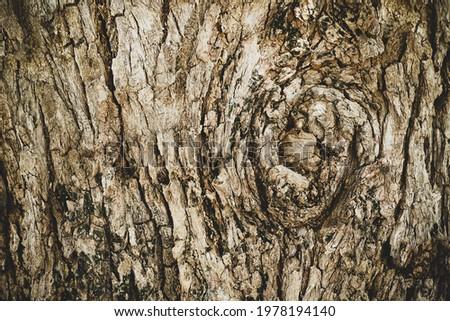 Weathered gray horizontal wood texture seamlessly tileable Stock photo © Balefire9