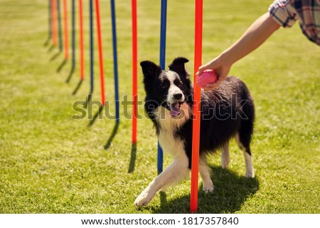 Dog Agility Stock photo © manfredxy