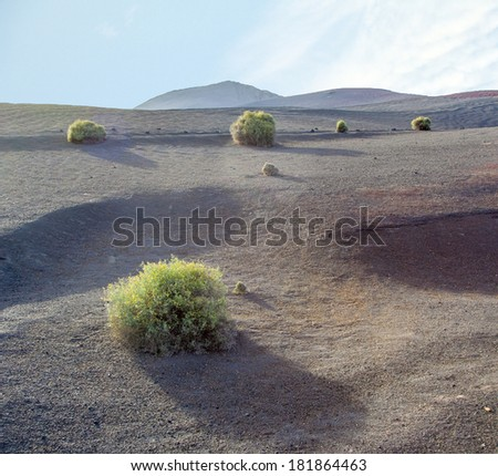 sparse vegetation at volcanic stones in Lanzarote with volcano Stock photo © meinzahn