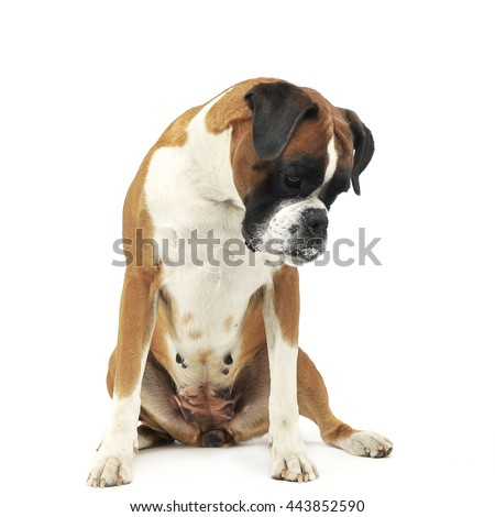 mixed breed funny ears dog sitting and looking down in a dark ph stock photo © vauvau