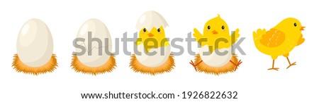 Boldog citromsárga csirke rajzfilmfigura tojás szívek Stock fotó © hittoon