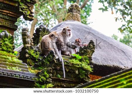 Majmok majom erdő Bali Indonézia család Stock fotó © galitskaya