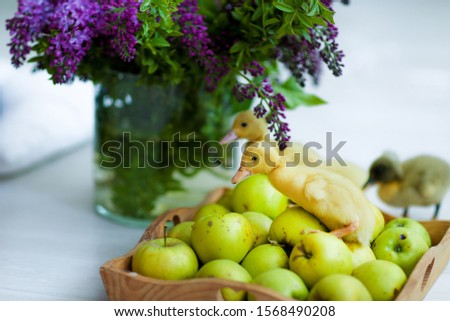 Animais pequeno viver maçãs foto Foto stock © ElenaBatkova