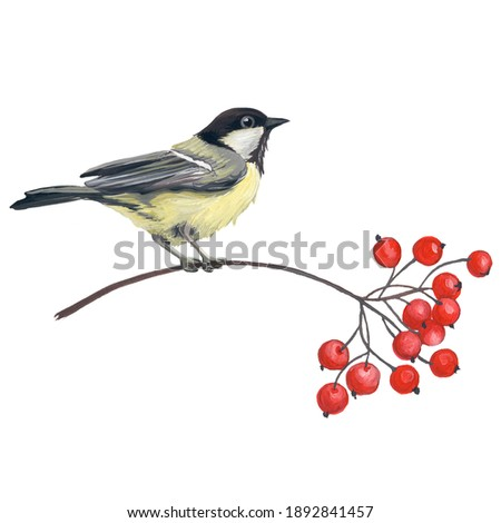 Watercolor hand painting illustration with branches rowan berry  Stock photo © ShustrikS
