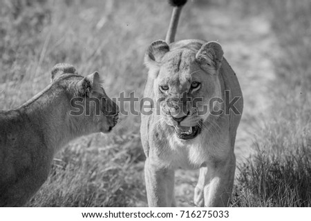 Twee weinig argument park Botswana reizen Stockfoto © simoneeman