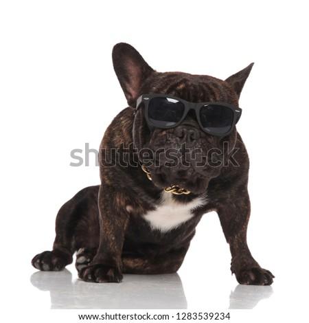 Stockfoto: Grappig · frans · bulldog · bril · gouden