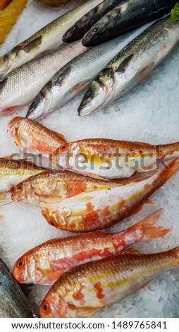 freshly caught striped red mullet on ice for sale at fish market stock photo © boggy