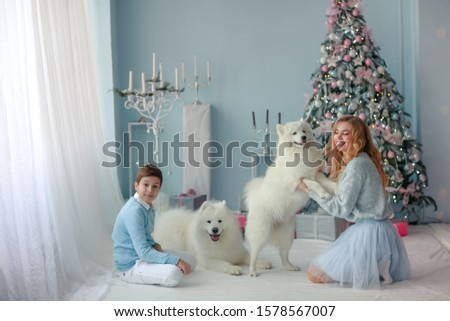 Family Christmas photo of mother and adult son with Pets purebred Samoyed Stock photo © ElenaBatkova