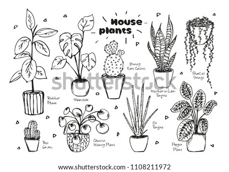 Collection of hand drawn indoor house plants. Collection of potted plants Stock photo © BlueLela