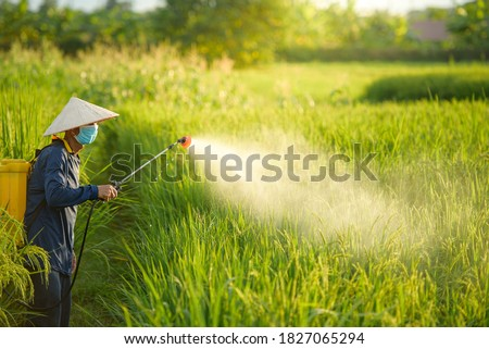 Farmer spraying pesticide to rice by insecticide sprayer with a proper protection in the paddy field Stock photo © galitskaya