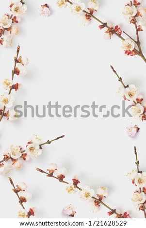 Festive frame from fresh natural twigs of blooming apricot on a white. Stock photo © artjazz