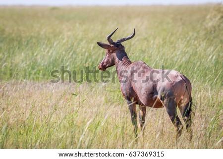 parque · natureza · viajar · África · arbusto - foto stock © simoneeman