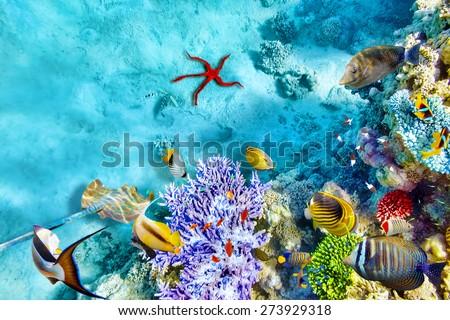 Wonderful and beautiful underwater world with corals and tropical fish Stock photo © galitskaya