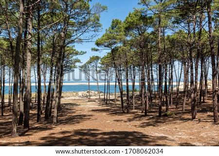 Coast bay Gironde in France Stock photo © ivonnewierink