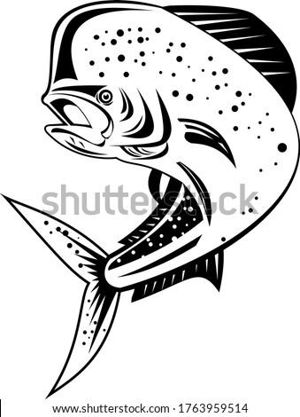 Dorado Dolphinfish or Mahi-mahi Jumping Up Retro Black and White Stock photo © patrimonio