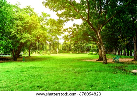 Public park at summer, green nature, wooden benches, street lights, trees, fir tree at background Stock photo © robuart