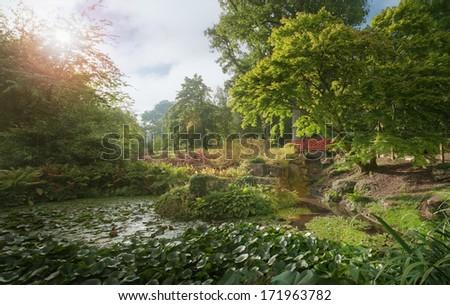 Lily étang après-midi Angleterre vue eau Photo stock © jayfish
