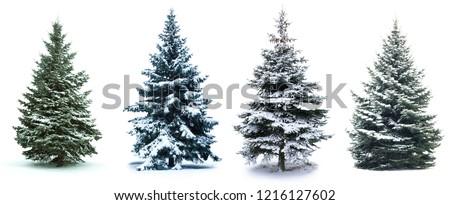Vert branche arbre de noël arbre heureux cadre Photo stock © tetkoren