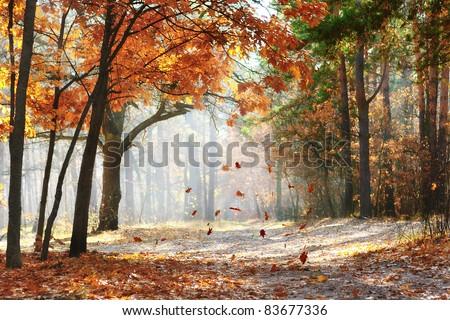 Pintoresco otono forestales iluminado manana sol Foto stock © amok