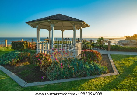 美しい ビーチ 午後 太陽 高い 花 ストックフォト © aspenrock