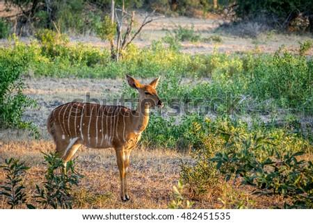 Stock fotó: Női · park · Dél-Afrika · állatok · fotózás