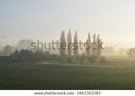 foggy rural landscape in morning in the eifel Stock photo © meinzahn