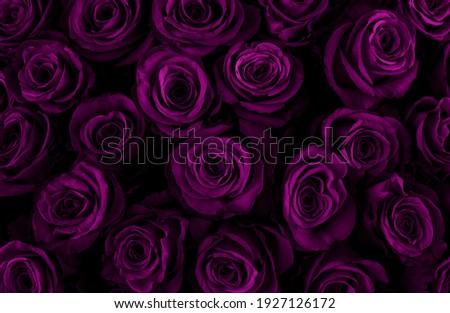高級 花束 紫色 バラ 花 咲く ストックフォト © Anneleven