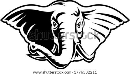 Elephant With Long Tusks Head Front Mascot Retro Black and White Stock photo © patrimonio