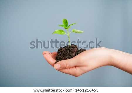 womans hand holding a plant growing out of the ground on white stock photo © tetkoren