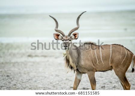 portret · woestijn · Botswana · reizen · vlees · park - stockfoto © simoneeman