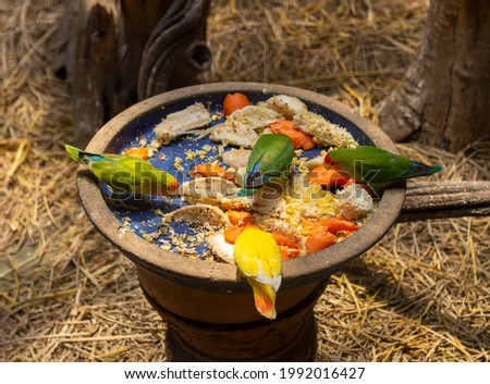 The meal of a green bird canary in a zoo Stock photo © stefanoventuri