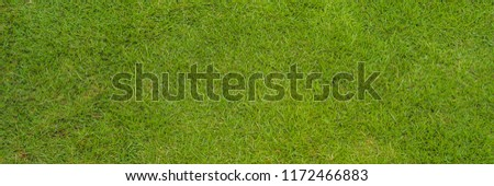 Perfect lawn with green grass view from above BANNER, long format Stock photo © galitskaya