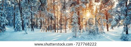 blanc · noir · panoramique · vue · neige · hiver · montagnes - photo stock © vichie81