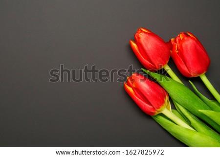 Bandeira fresco vermelho tulipas preto buquê Foto stock © Illia