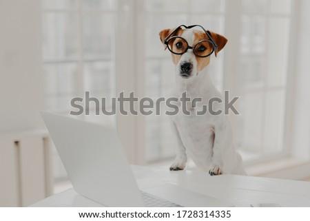 выстрел Джек-Рассел терьер оптический очки Лапы Сток-фото © vkstudio
