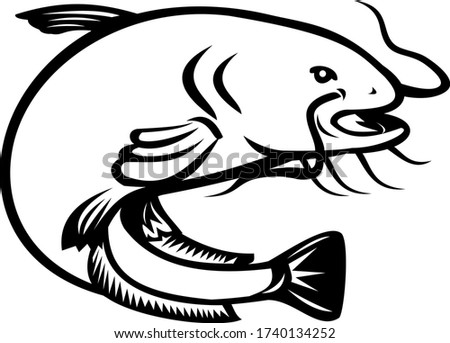 Wels Catfish Jumping Side Retro Black and White Stock photo © patrimonio