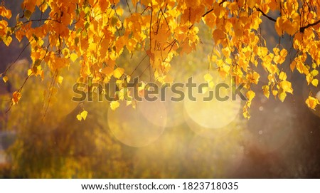 Beautiful scene of fall with birch in foreground. Stock photo © kyolshin